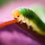 Amazing Photography 2