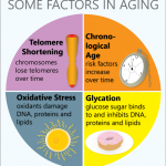 Highly Effecting Ageing Factors